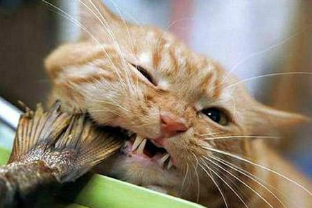 cat-food-no-4