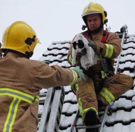 cat-rescue 5