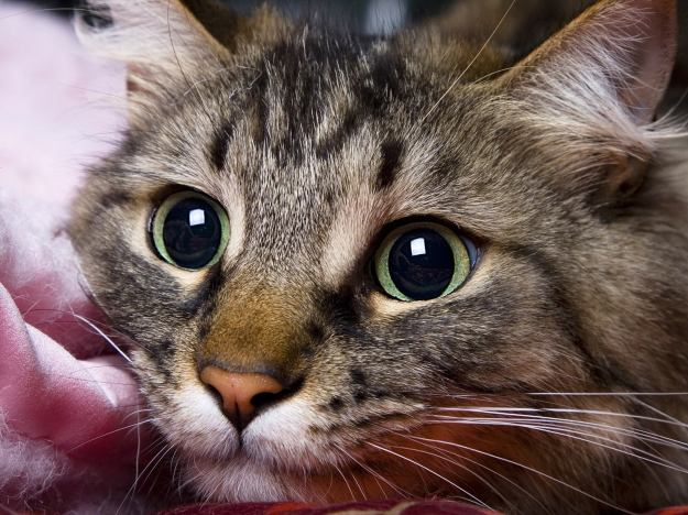 Испуганная кошка_2