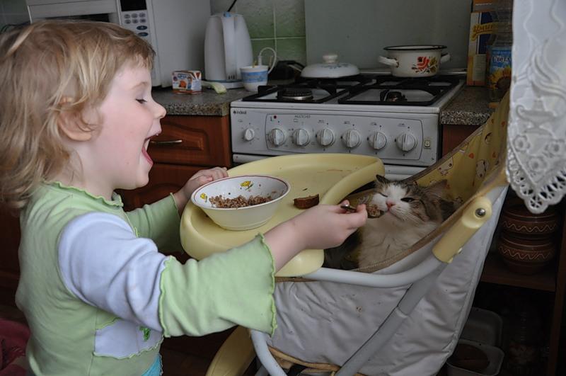 Кошка и детское питание