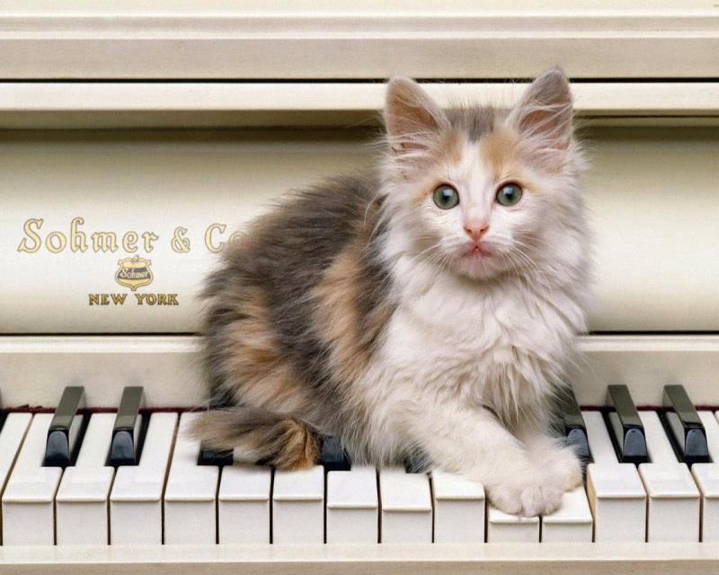 слух у кошки