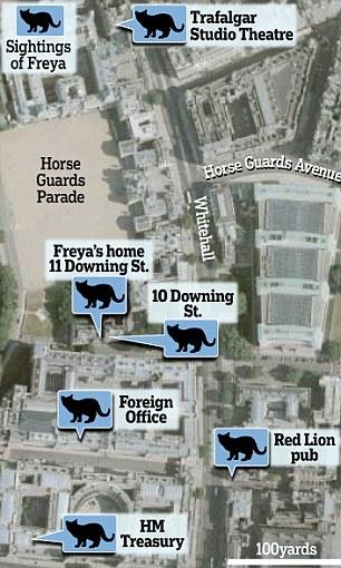 Chancellor George Osborne's cat Freya at Downing Street, London, Britain - 19 Jul 2012
