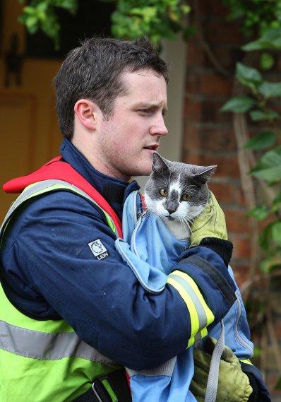 fireman-cat 10