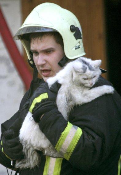 fireman-cat 7
