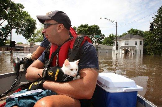 fireman-cat (9)