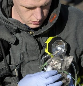 fireman-saves-cat (4)