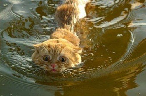 Cat-in-Water-1