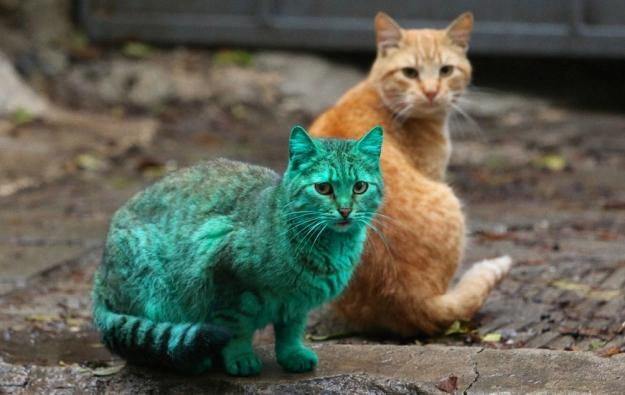 Зелёный кот_I