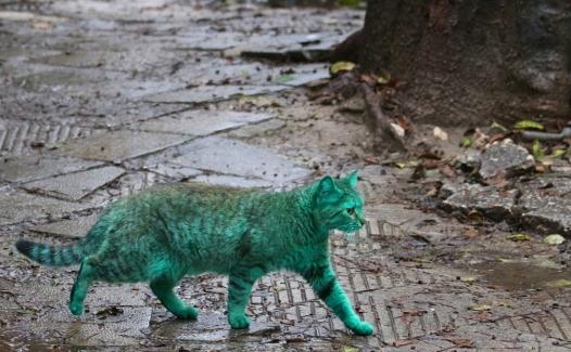 Зелёный кот_II