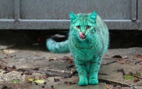 Зелёный кот_VIII