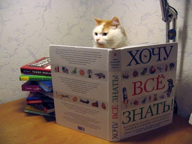 котэ-живность-кот-ученый-1102652