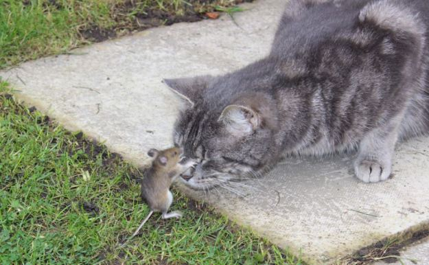 The Mouse that Spooked a cat