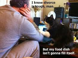 Divorce-Cat
