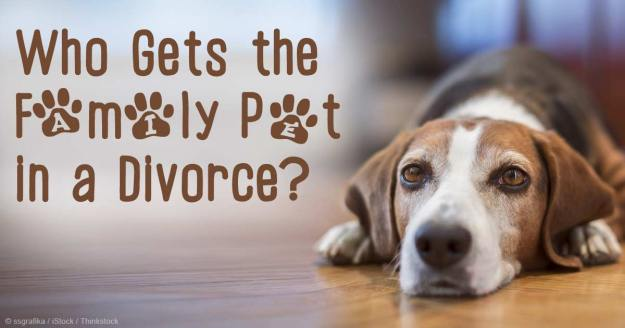 family-pet-divorce-fb