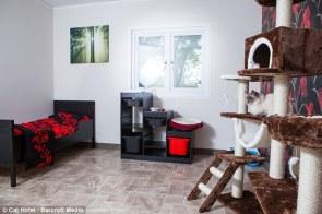 Hotel Cat 2