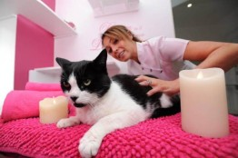 Ings Luxury Cat Hotel 2