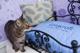 Longcroft-Cat-Hotel-St-Albans-2
