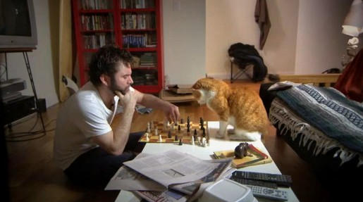 meetup-chess-cat