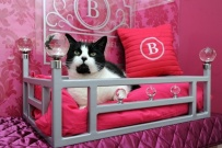 The_Ings_Luxury_Cat_Hotel_Poster_bed