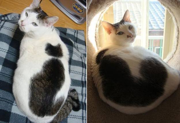 "Кошка с ""кошкой"""