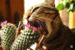 1407165041_13329-kot-s-kaktusom1