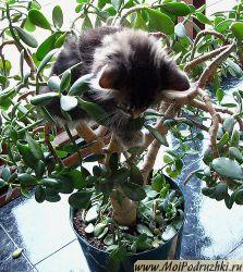 cats_plant