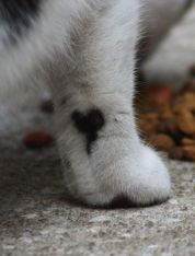 cats_with_fur_hearts_02
