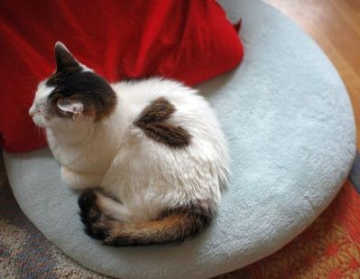 cats_with_fur_hearts_04