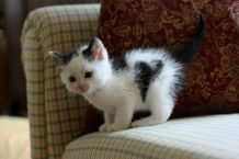 cats_with_fur_hearts_05