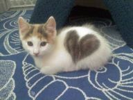 cats_with_fur_hearts_08