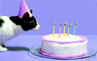 кот с тортом