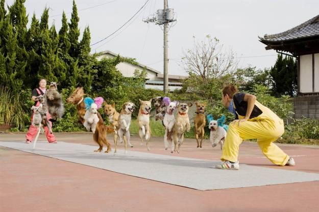 Собаки прыгают через скакалку