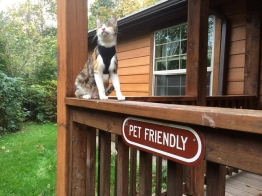 honey-bee-pet-friendly-washington