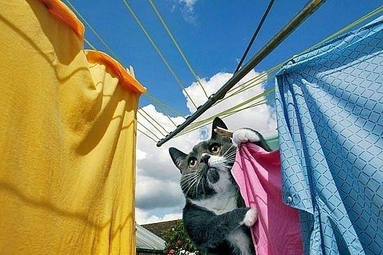 ideal-cat