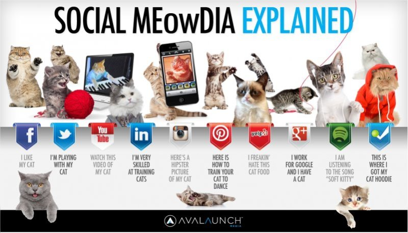 Social_Media_Explained_With-_Kittens