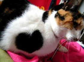 Valentine_Cats_8
