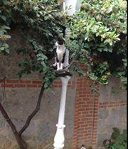Irina Fomina а вот вам кошачий командир))) осматривает территорию около старого султанского дворца ))