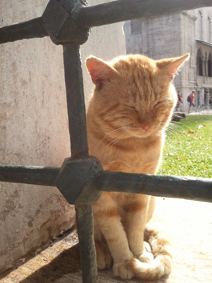 Стамбульский рыжик