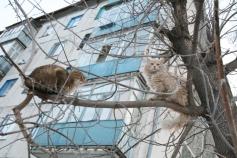 1274529_67410_кошка на дереве5