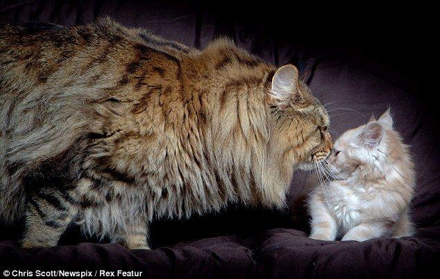 big_cat_03