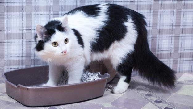cat-litter-box - копия