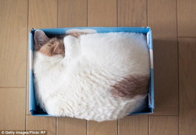 коробки2