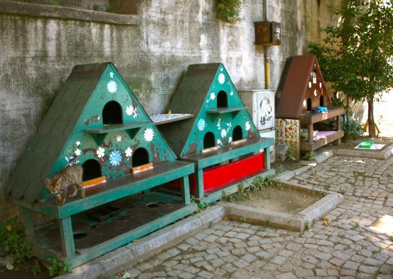 кошки и домики стамбул