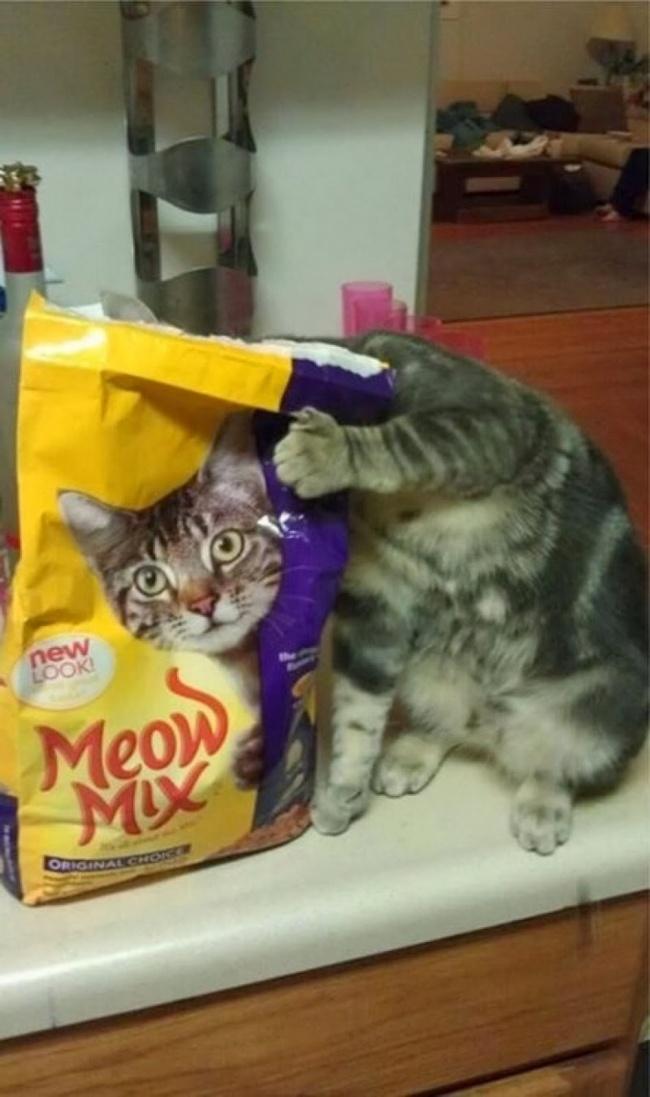 На что намекает своей маскировкой этот кот? На то, что хочет есть, или что не прочь снятся в рекламе?