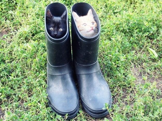 Настоящие коты в сапогах.