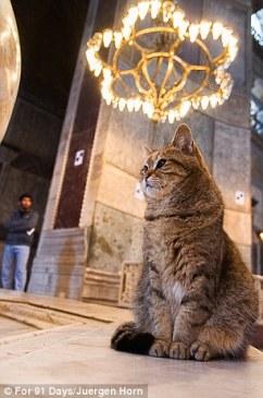 Стамбул (12)