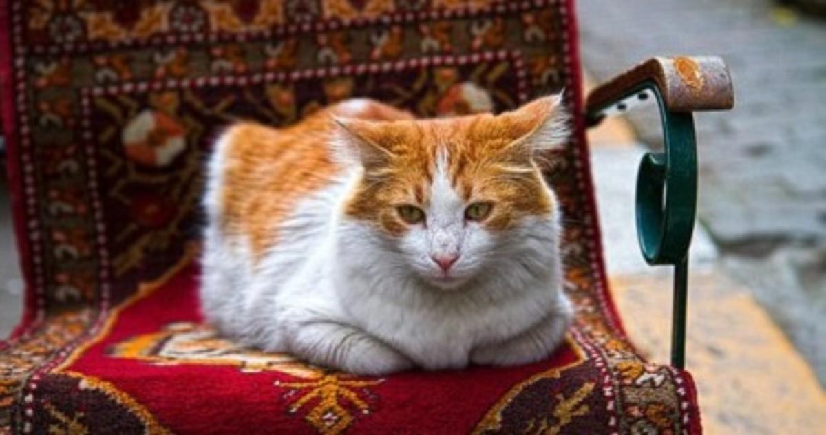 Стамбул — город кошек