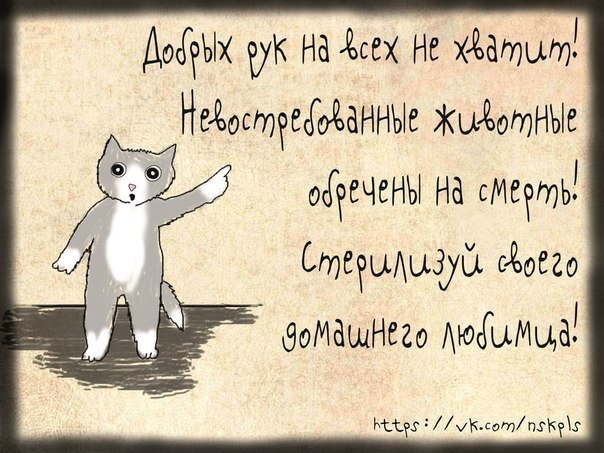 Стерилизуйте кошку_10