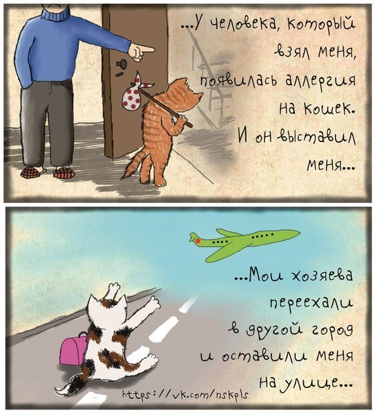 Стерилизуйте кошку_2