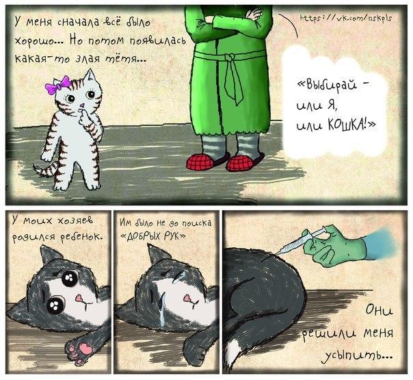Стерилизуйте кошку_3